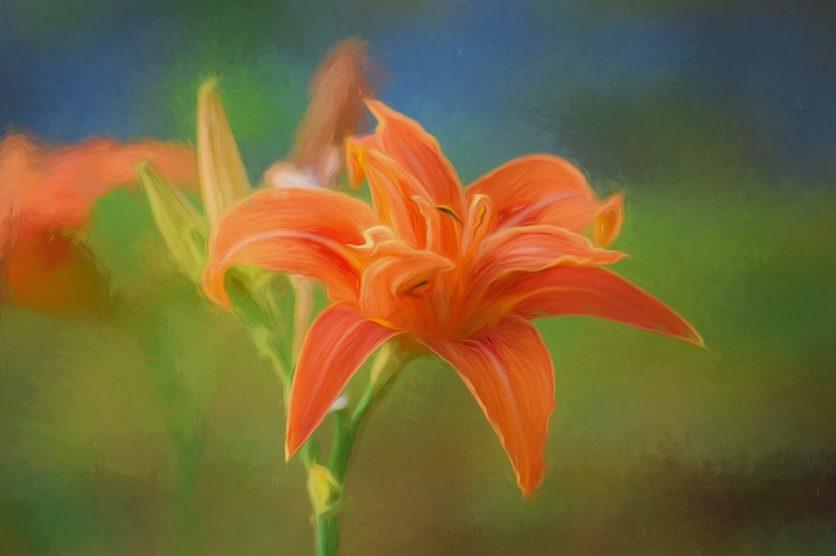 Blume Kunstdruck