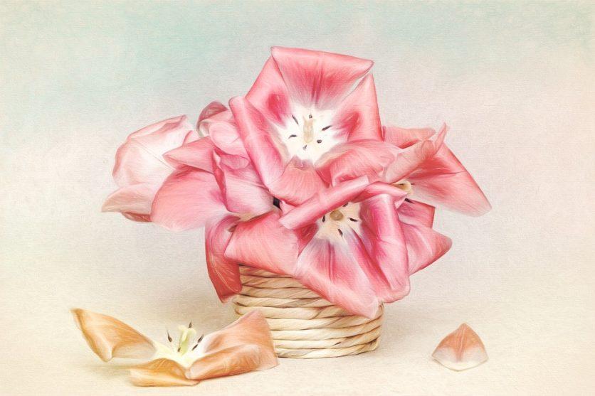 Tulpen Kunstdruck