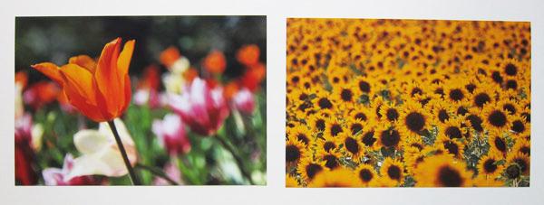 Farbprächtige Blumenfotos
